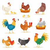 Chicken Vector Cartoon Chick Character Hen And Rooster In Love With Baby Chickens Or Hen Sitting On  poster
