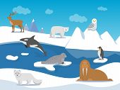 Arctic Landscape With Different Polar Animals. Vector Animal Arctic, Polar Landscape With Penguin An poster