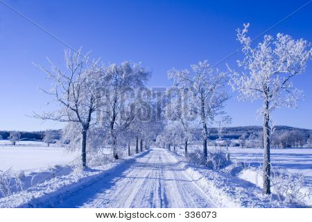 Winter Way