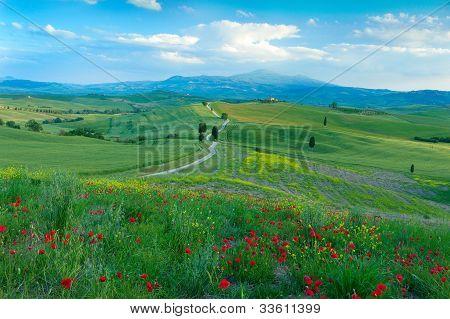 A Road Through Tuscany, Italy