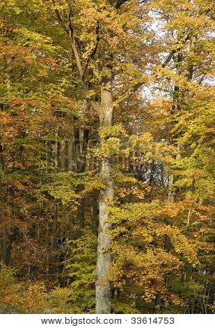 Tree Detail With Autumn Foliage