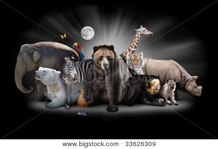 Zoo Animals at Night with Black Background