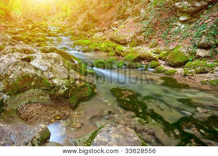 The Picturesque Mountain Forest Stream