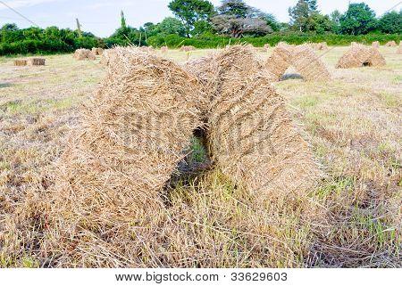 Straw Stack In Field