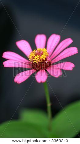 A-Flower  230708003
