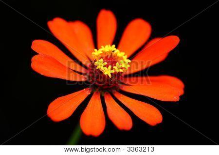 A-Flower  230708002