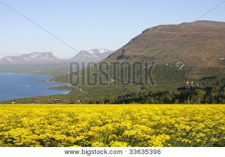 Rapeseed fields in the mountain.