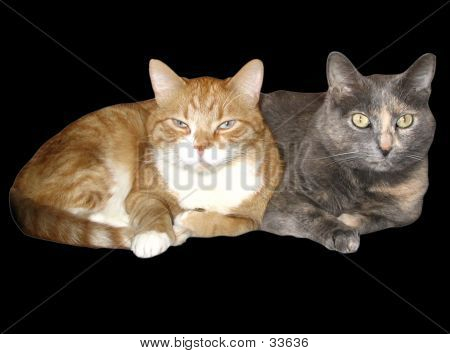 Reclining Cats