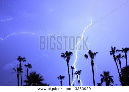 Palms Trees And  Lightning Thunder Storm