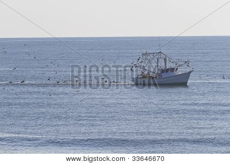 Seabirds And Fishing Trawler