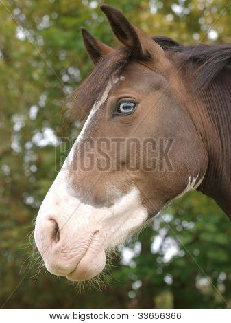 Horse With Blue Eye