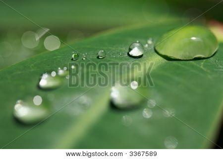A Dew