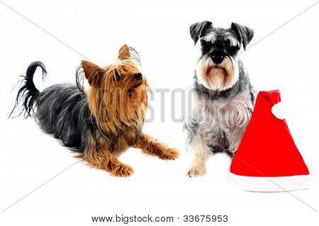 Two Cute Lovable Pets