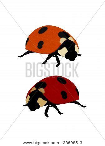 Illustration Of A Ladybug.