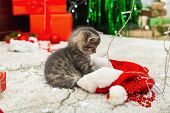 Funny Little Kitten Plays With A Christmas Decor. Tabby Kitten Plays With A Christmas Decor. Christm poster