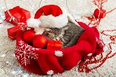 Christmas Cat Wearing Santa Claus Hat Holding Gift Box Sleeping On Plaid Under Christmas Tree. Chris poster