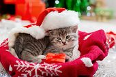 Christmas Cat Wearing Santa Claus Hat Holding Gift Box On Plaid Under Christmas Tree. Christmas Pres poster