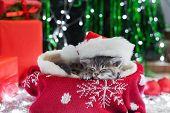 Sleeping Christmas Cat. Beautiful Little Tabby Sleeping Kitten, Kitty, Cat In Red Santa Claus Hat Ne poster