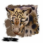Sunda Clouded Leopard Watercolor Portrait Closeup. Neofelis Diardi Animal From Feline Mammals Family poster