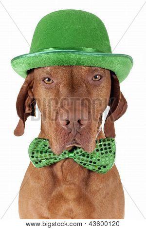 St.patrick's Day Dog