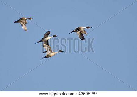 Quatro macáes norte voando no céu azul