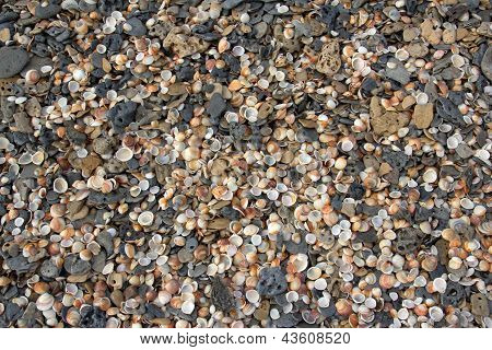 Shells And Pebbles On A Beach