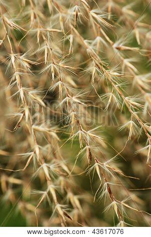 Dreamy Looking Dried Flower Husks