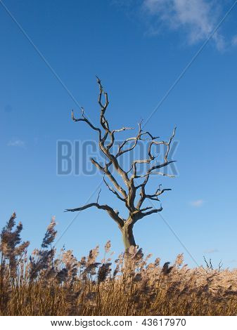 Tree Under Blue Sky