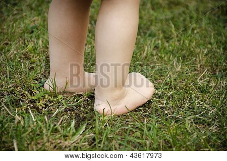 Baby Feet On Grass