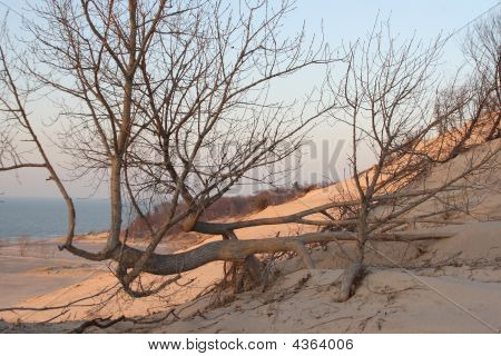 A Contorted Tree On The Beach
