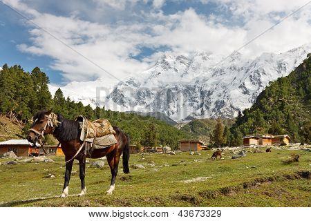 Nanga Parbat Scenery, Himalaya, Pakistan
