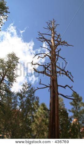 Upshot Of Dead Tree