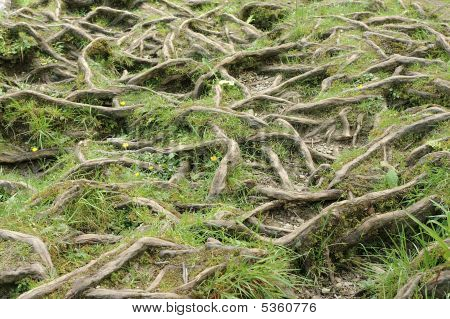 Water Worn Tree Roots