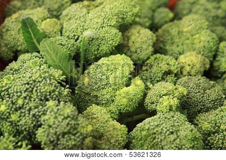 Cabbage - Broccoli - Brassica Silvestris