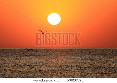 Sunrise over the sea. Two flying seagulls