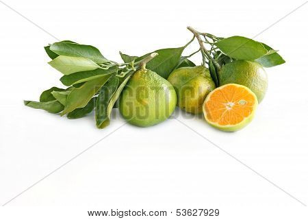 miyagawa citrus fruits
