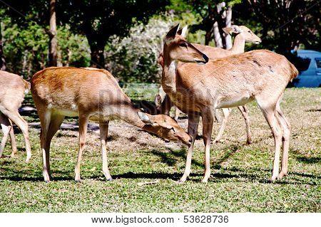 Deer on land in zoo