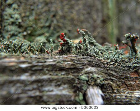 Macro Fungi