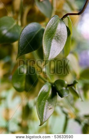 Mini leaf