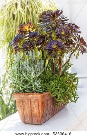 Sedum and sempervivium plants in a terracotta pot.