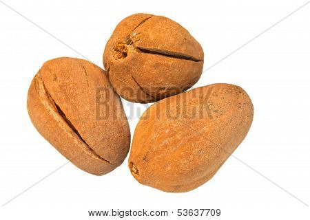 broad leaf mahogany seed isolated on white,mahogany in good herb fruit for healthy treatment
