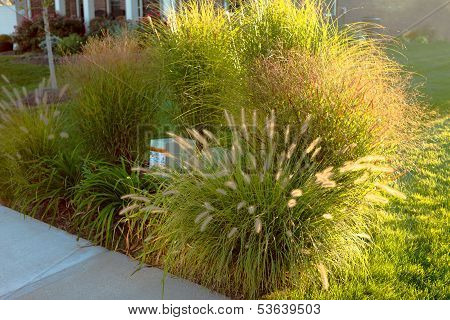 Hiding Underground Power Line Boxes With Giant Ornamental Grasses In The Neighborhood