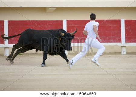 Saintes Maries De La Mer, La Camargue, Provence, France, Europe - October 29, 2008: Bullfight In The