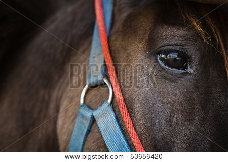 An Eye Of A Horse