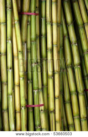 Bundles Of Fresh Sugar Cane