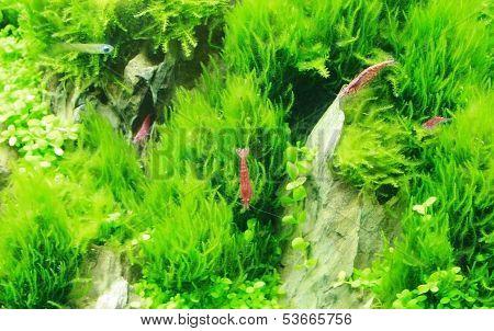 Beautiful Small Shrimp