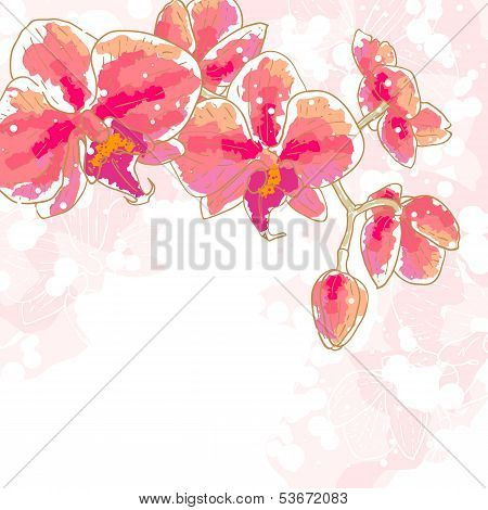 Branch Of Orchids On White Background