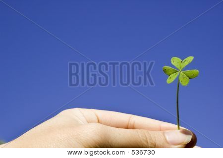Finger Holiding A Clover In Sky Background