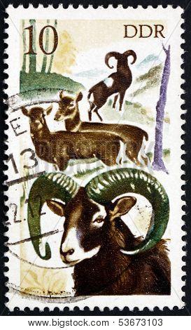 Postage Stamp Gdr 1977 Mouflons, Animal
