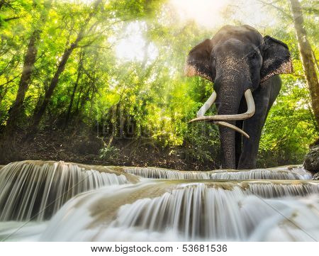 Erawan Waterfall With An Elephant